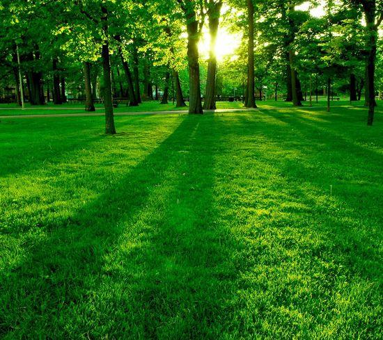 Summer Sunset Park Forest Love Nature