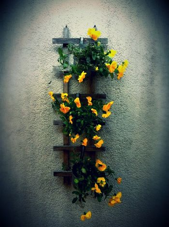 Flowers Flowers On The Wall Yellow Flowers Summer Summer Flowers