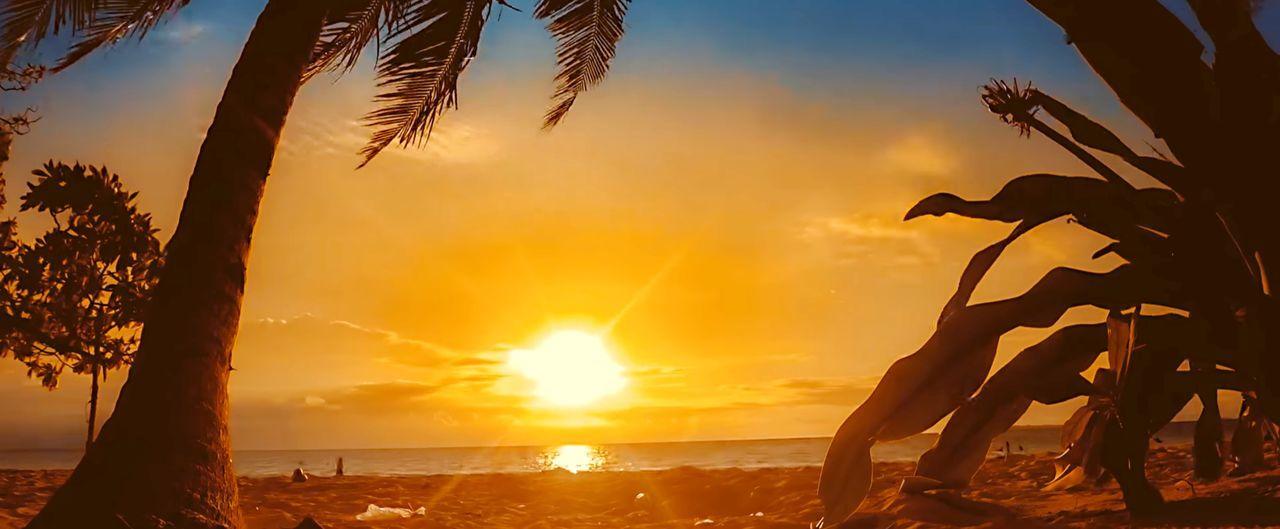 sunset Sunset Nature Landscape Outdoors Outdoor Photography Sun Beach EyeEm 2018 Natural Beach EyeEm Nature Lover EyeEm Best Shots - Landscape Tree Water Sea Sunset Beach Silhouette Sun Summer Palm Tree Sky