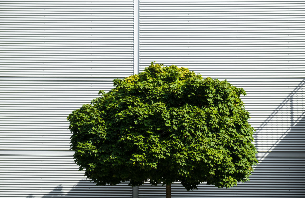 Close-Up Of Tree Against Building