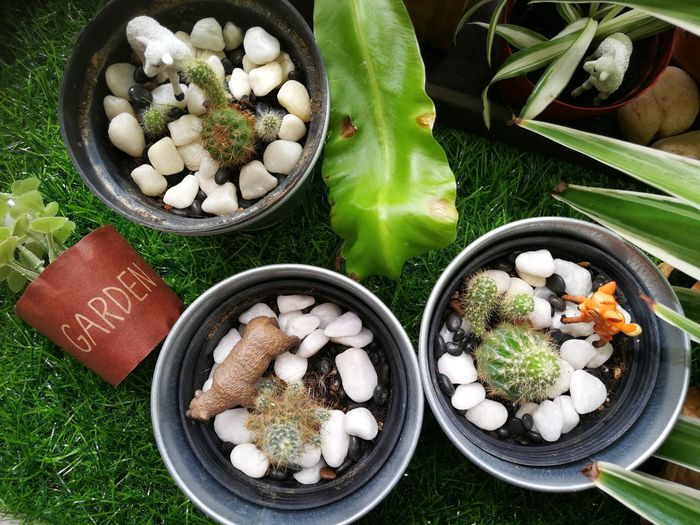 Mini garden Green Flatlay Garden Miniature High Angle View Close-up