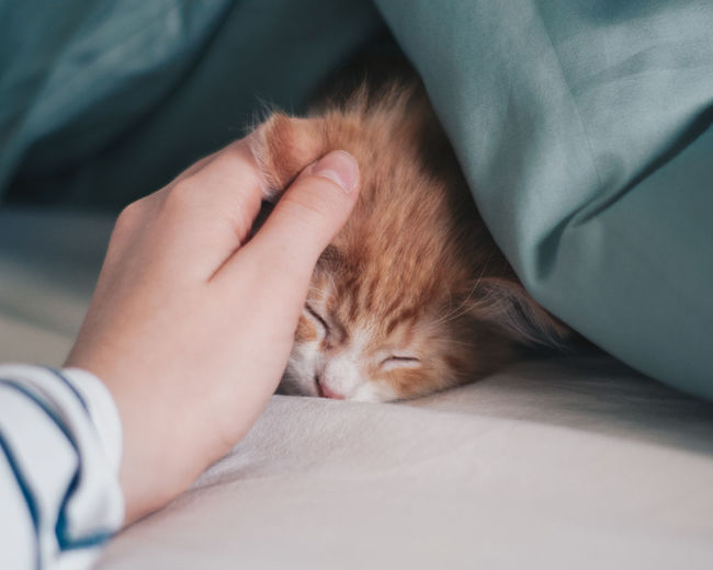 Cropped hand on sleeping cat