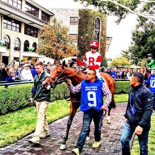 Bobbyskitten at Keeneland Selfie Fall Autumn Selfies Thoroughbredhorse Thoroubredracing Thoroughbred Kentucky  RamseyFarm