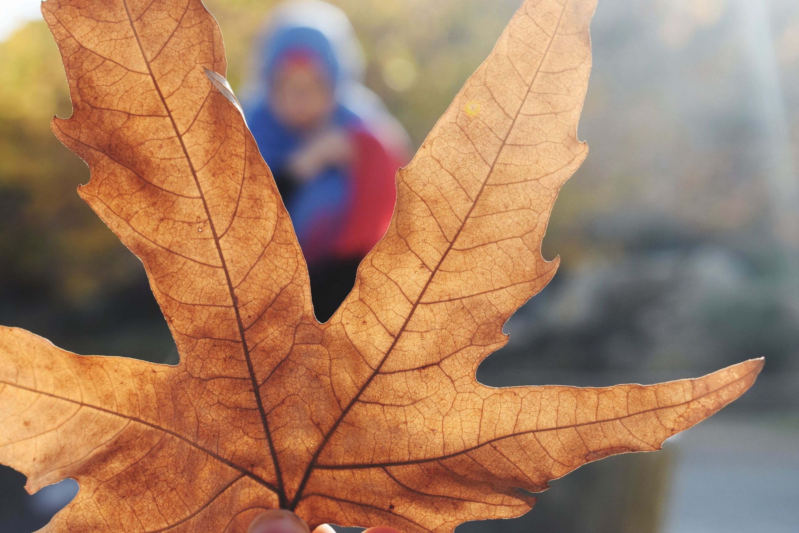 autumn, leaf, change, dry, outdoors, maple, day, maple leaf, close-up, focus on foreground, nature, no people, beauty in nature