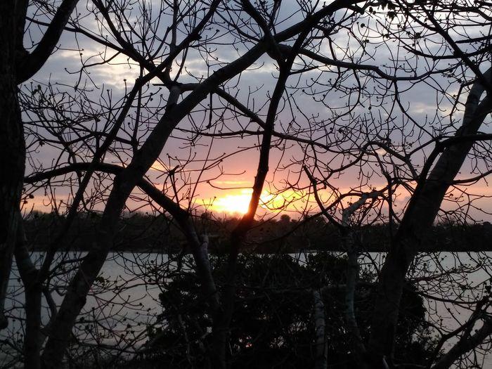 Tree Sunset Sky Silhouette Beauty In Nature NTB Lombok Island DELTA API Rumahalir Jerowaru