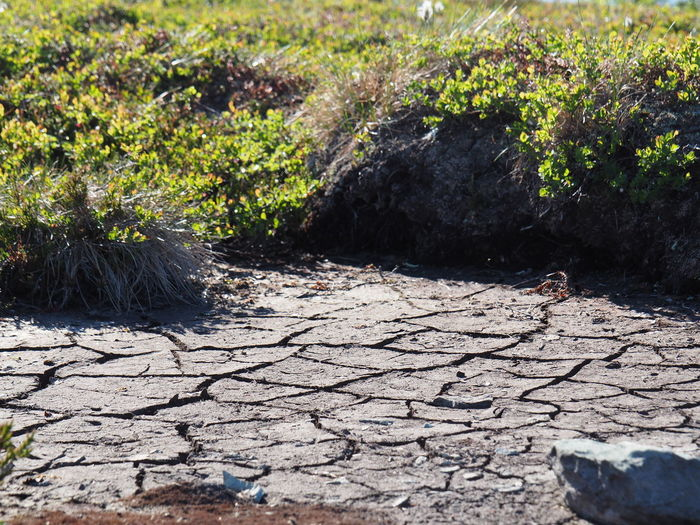 The climate gets warmer Plant Nature Environment Environmental Issues Cracked Landscape Mud Arid Climate No People Dirt Rock Scenics - Nature Climate Climate Change