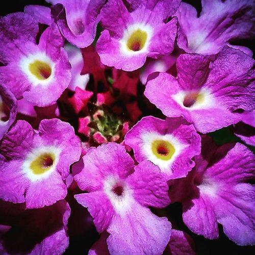 Pink Flowersandmacro Flowers Nature Af_floral➡🌼flowers 9vaga_colorpink9 Pocket_colors Rainbow Wall Tv_simplicity Simplicity Paradise_minimal Nothingisordinary Minimal_mood Minimal_int Pocket_minimal Minimalgram 9vaga_dailytheme9 Fromyourprospective_44 Pocket_pretty Tvc_uc_purple 9vaga_colorpink9 Andthepurplecrayon_ffff Tvc_np_purple Purplecrayon_orange