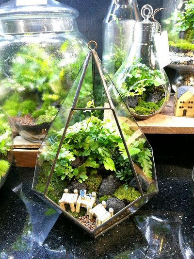 Terrarium Plants Plant Plants And Flowers Planting Glass Decoration Green Growing Growth Taking Photos Enjoying Life Enjoying Life Goog Times Traveling Nice Photography Decorative