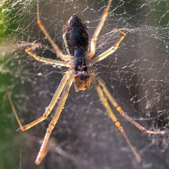 Paura Terrore Fobia Aracnidi macro macrocloseup ragno spider Spiderman ragnatela web