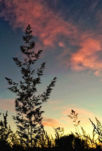 Dawn Grass Grass And Sky