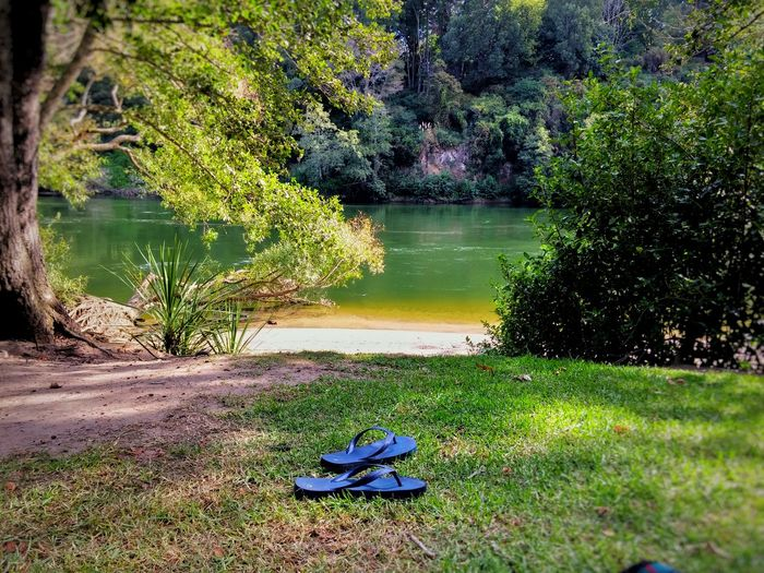 My son and i found the perfect spot for a picnic today😍 Nzflora Travel Destinations New Zealand Landscape Riverbank Showcase March Hamilton NZ Picnic River Grass Outdoor Photography The KIOMI Collection Native Birds Colour Image Native Bush Breathtaking View No People Relaxation Tranquil Scene Serenity Jandals Shoes Off Sunshine Reflections In The Water Landscapes With WhiteWall Floating On Water The Great Outdoors - 2016 EyeEm Awards