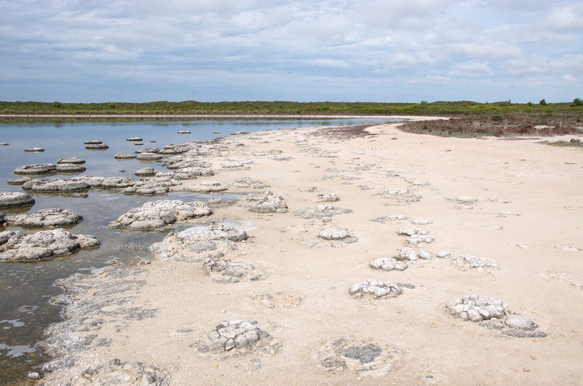 Lake Thetis landscape during a drought with stromatolites in Cervantes, Western Australia. Australia Beach Beauty In Nature Cluster Coastal Drought Fossil Geology Lake Lake Thetis Landscape Layered Living Marine Natural Nature Phenomena Rare Saline Lake Sand Sediment Stromatolites Thetis Thrombolites Western Australia