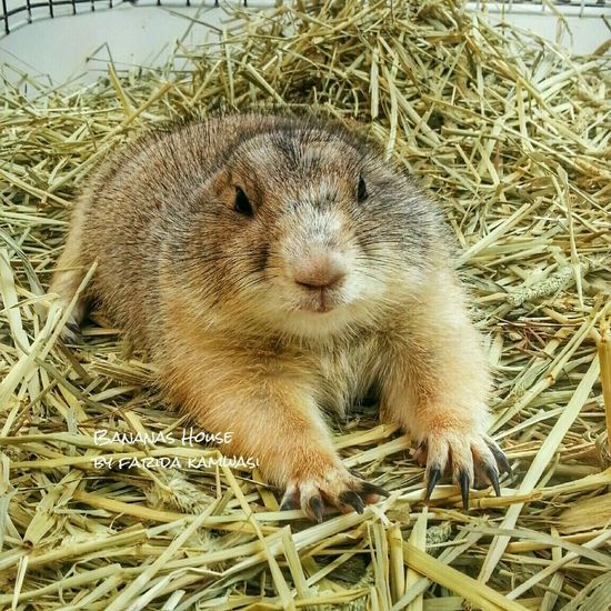 Prairiedog Prairiedogs Winter Animals