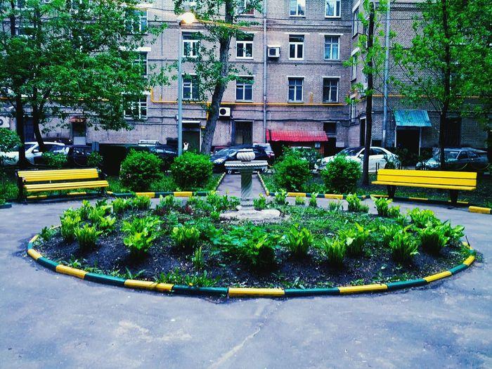 Двор или лицо с желтыми глазами и улыбкой. двор город