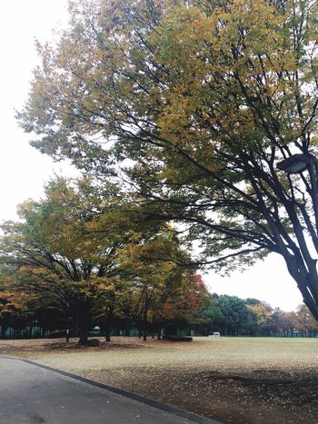 The End Of Autumn Park Japan