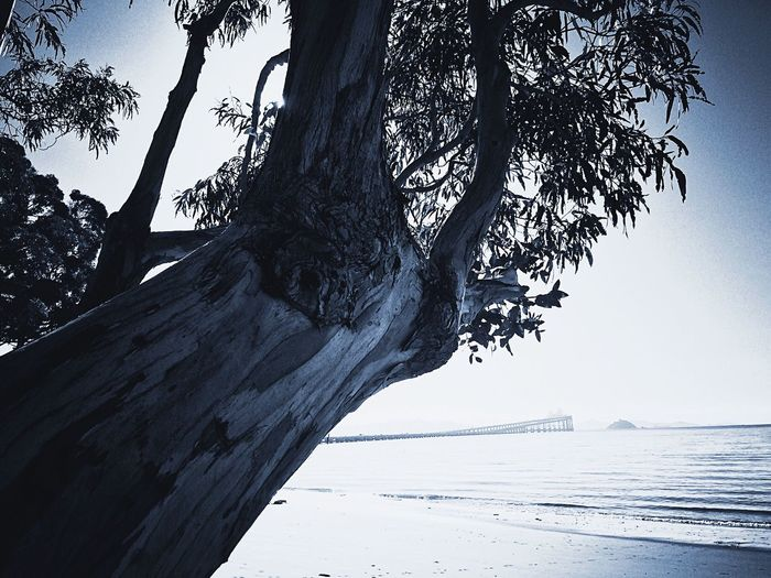 Tree Nature Sea Outdoors Day Tranquility No People Tree Trunk Scenics Sky Water Beach Clear Sky