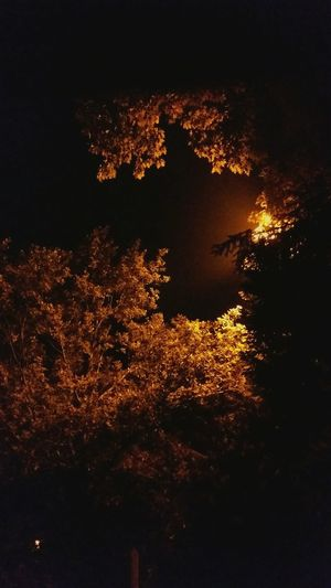 Fall evening Fall Autumn Yellow Orange Black Light Germany Peaceful