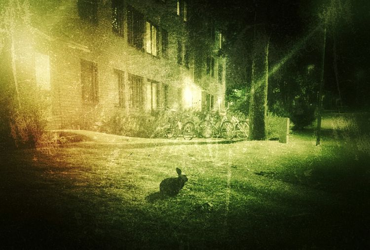 black rabbit by the door. Viggnetting Greenish Evening Home Rabbit ❤️ Wonderland