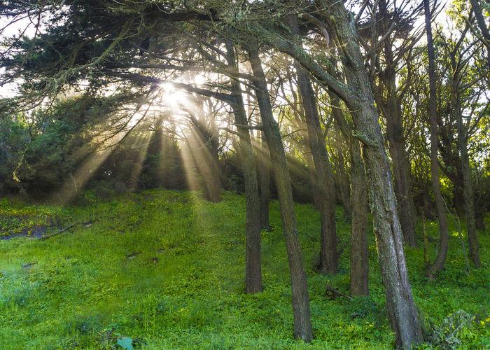 light thru the trees Trees And Nature