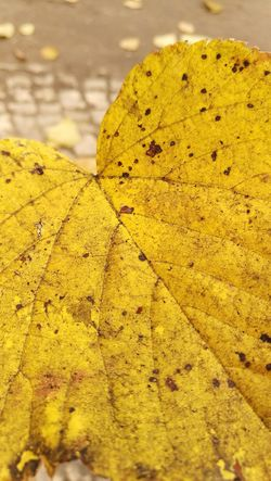 Yellow No People Nature Outdoors Fragility Day Close-up Leaves The Week Of Eyeem Leaves🌿 Huawei P9 Leica Berlin Huawei Nature Autumn Collection Full Frame Autumn