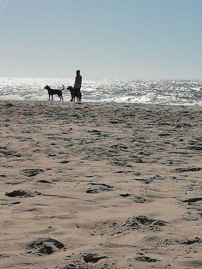 Sea Beach Full