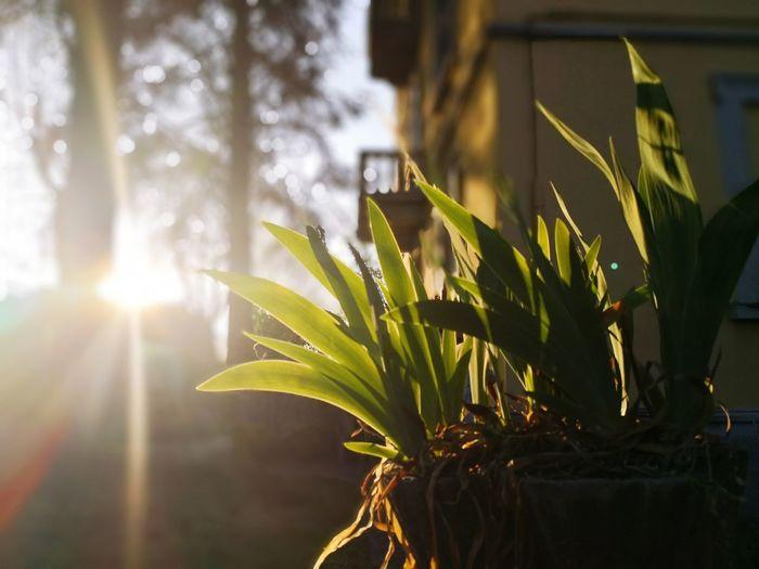 Leaf Water Sunlight Summer Sun Lens Flare Social Issues Sunbeam Tree Close-up