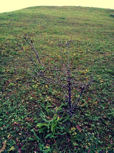 Growth Green Color Nature No People Plant Tranquility Beauty In Nature Backgrounds Day Outdoors Close-up Tree