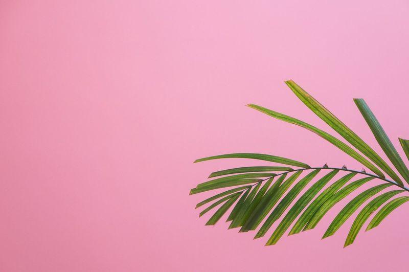 Pastel Power Pastel Colors Pink Leaf Plant Museum Madrid España SPAIN Mood Social Media Collection