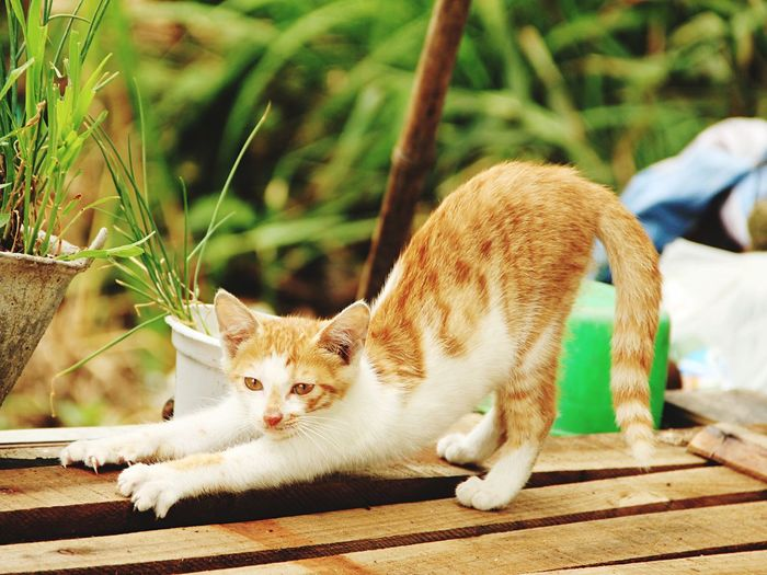 Cat Check This Out Enjoying Life Taking Photos Hello World On The Road 江苏兴化