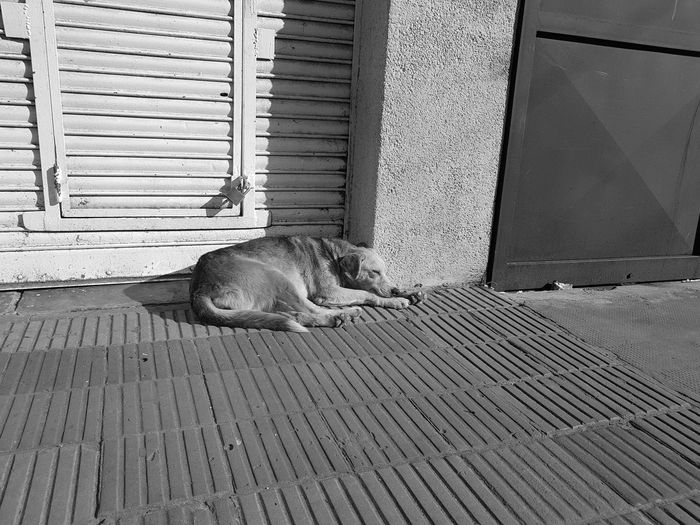 Mi hogar, la calle Pets Lover Streetphotography Street Alone Time Sunlight Dog Love EmEyeNewHere Pets Wood - Material Relaxation Close-up