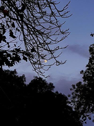 Moon Trees Tree Trunk If Trees Could Speak Nature Dusk EyeEm Best Shots EyeEm Selects WeekOnEyeEm