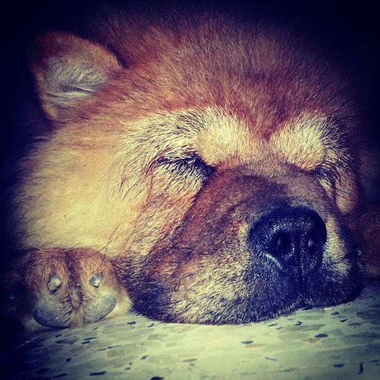 I Love My Dog . Relaxing Hello World