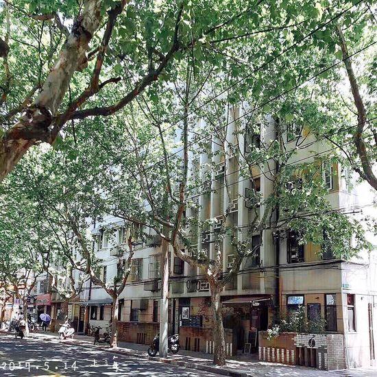 五月的上海,每一顆鬱鬱蔥蔥的梧桐。午後的陽光不會讓人覺得太刺眼,可以漫步在街頭,是一種享受。 Tree Green Sunshine Photography Hello World First Eyeem Photo Enjoying Life Happy City