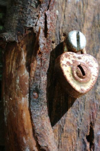 Close-up of old door knocker