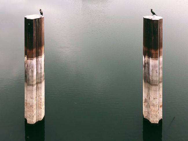Water No People Wood - Material Day Post Wooden Post Nature Lake Tranquility Pole Waterfront Architecture Old Reflection Built Structure Outdoors Transportation Close-up
