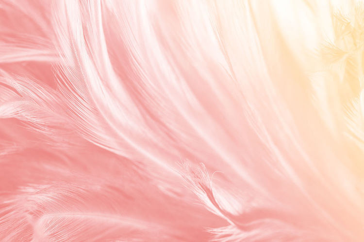 Pink Color Full Frame Backgrounds Close-up No People Softness Textured  Abstract Freshness Pastel Colored Abstract Backgrounds Extreme Close-up Fragility Multi Colored Nature Textile Vulnerability  Flower Still Life Macro Luxury
