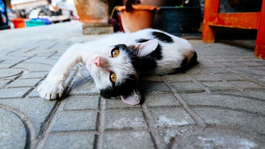 Cat Hello World