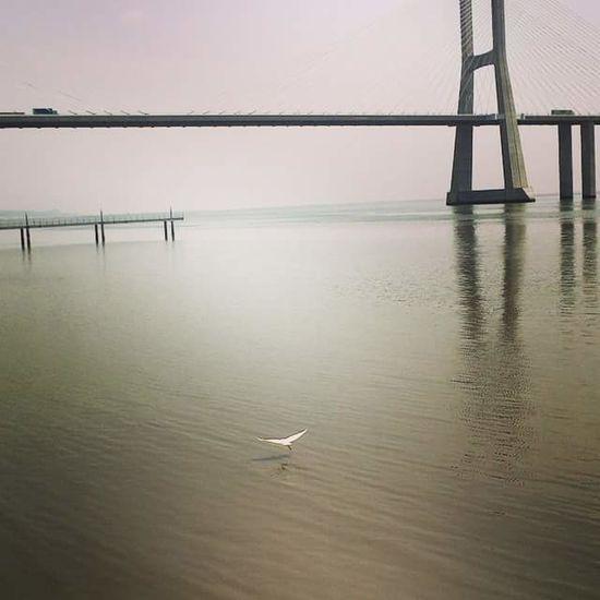 uma cegonha em costas fartou-se... Cegonha Rio Tejo Ponte Vasco Da Gama Water Reflection Tranquility Tranquil Scene Scenics
