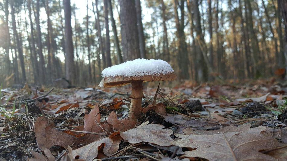 Mushroom Snow ❄