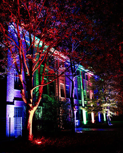 Illuminated trees by building at night