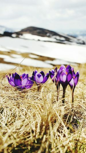 Beauty In Nature Purple No People Day Outdoors Flower