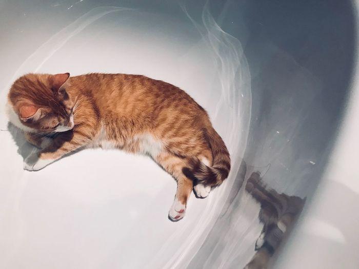 Cats 🐱 Selfimage Bathtub