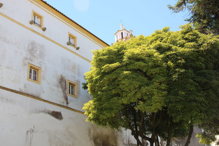 Architecture Blue Building Built Structure Day Green Color Growth Plant Portugal Sky Sunny Tree Évora