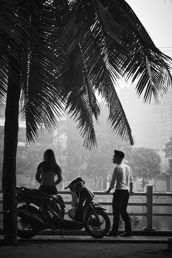 People riding horse cart on palm trees