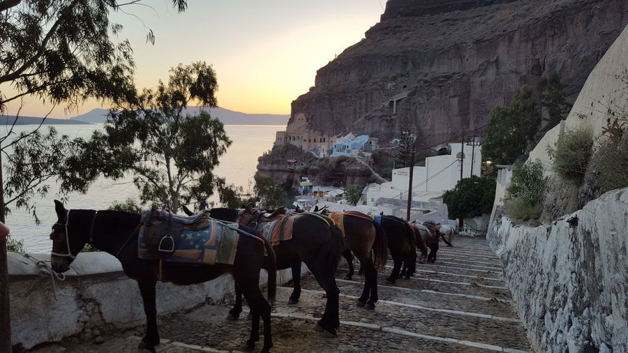 Horses resting and waiting for tourists Animal Themes Day Domestic Animals Hobby Horse Landscape Large Group Of People Livestock Mountain Nature Outdoors People Saddle Santorini Greece Sky Touristic Place Tree Working Animal