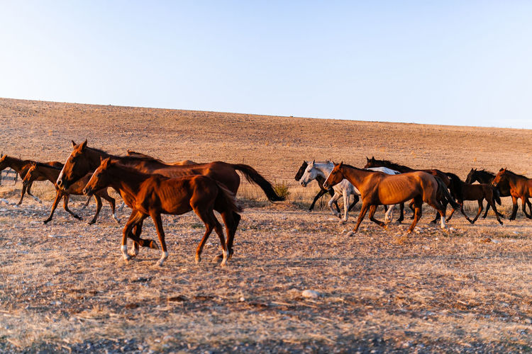 Horses running on field