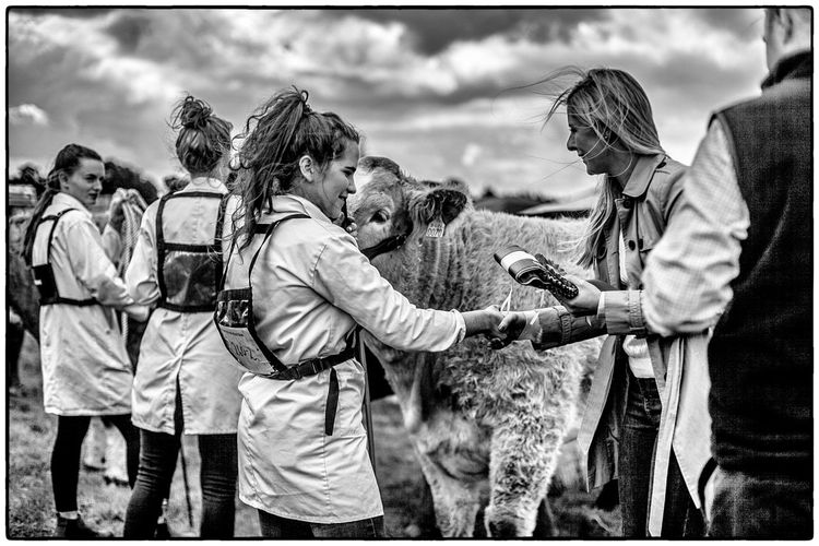 Agricultural show in Swinford, Ireland. August 2017 Ireland Cow Livestock Agriculture Real People Day Men Outdoors Togetherness Standing Women