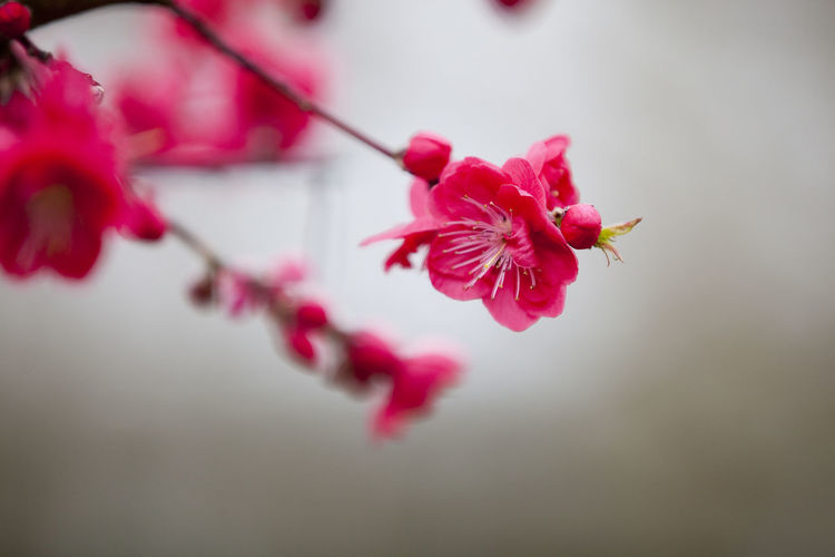 Close-up of red flowers on branch