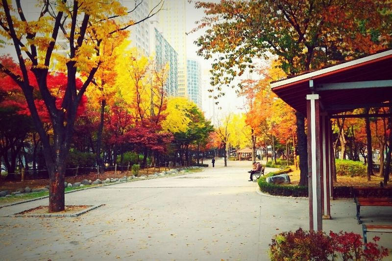 Hugging A Tree Last Fall Bench People EyeEm Nature Lover City Life Take A Rest Peaceful Place Park of Street 구로거리공원