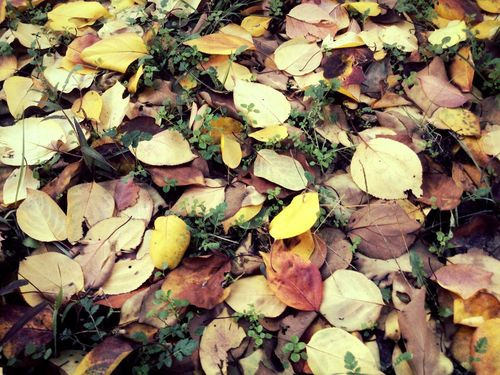 Autumn Leaves find your match
